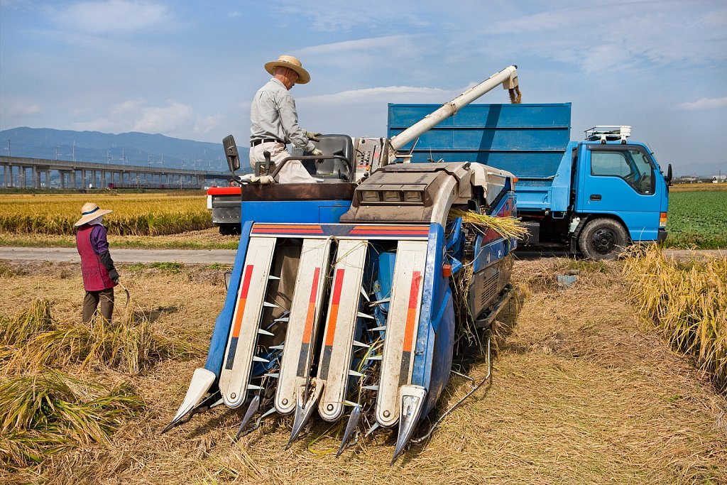 Combine fills hopper with harvested rice in Tosu, Saga, Japan