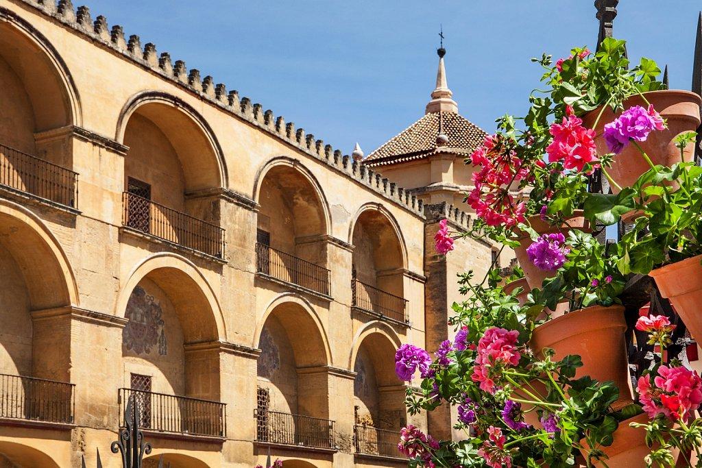 Geranium flowers at La Mezquita, Cordoba, Spain