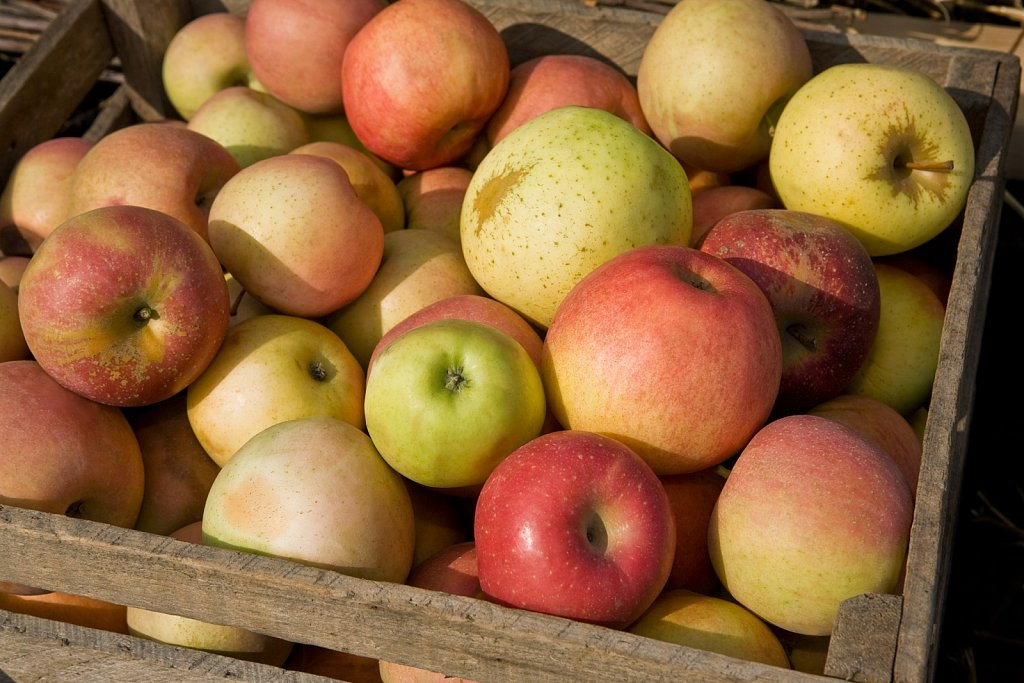 Box of apples in orchard, Indiana, United States