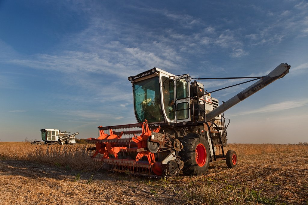 Harvesting soy beans in autumn, Indiana