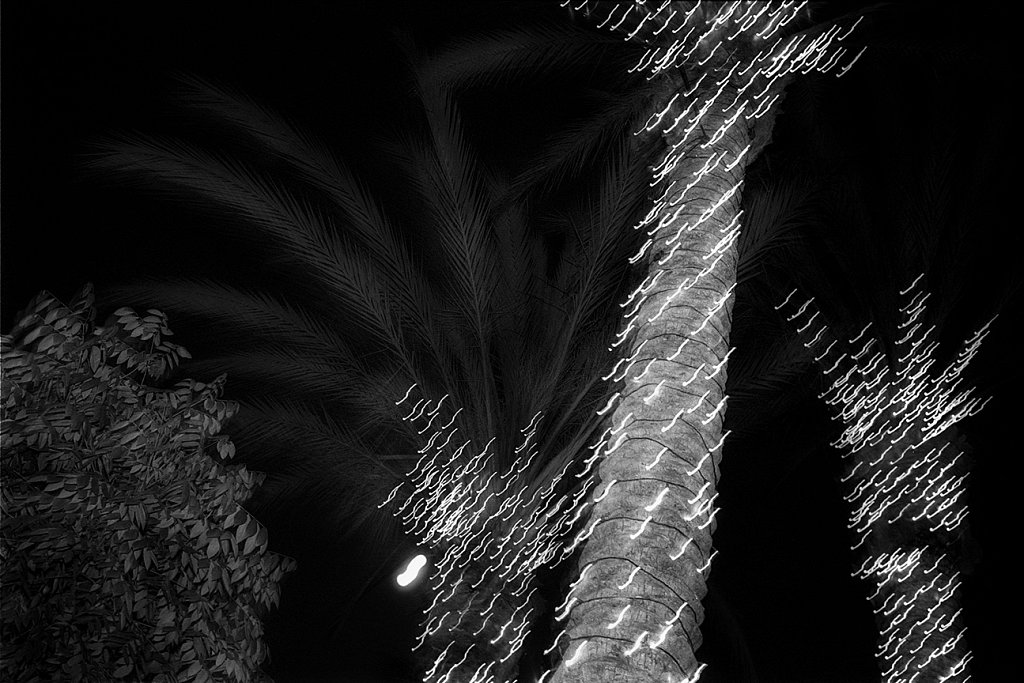 Palm tree lights, Los Angeles, California