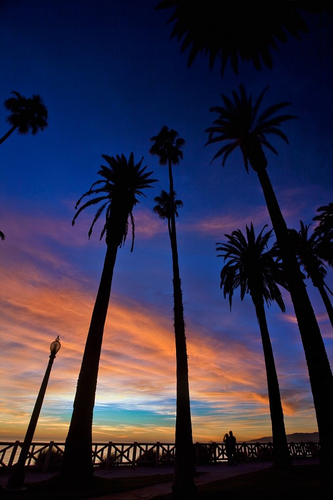 Sunset and palm trees in Santa Monica, California